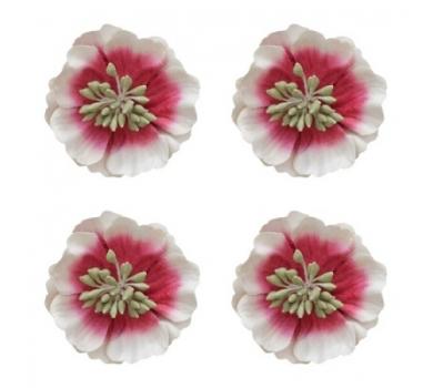 Цветы анемоны красно-белые, SCB291303
